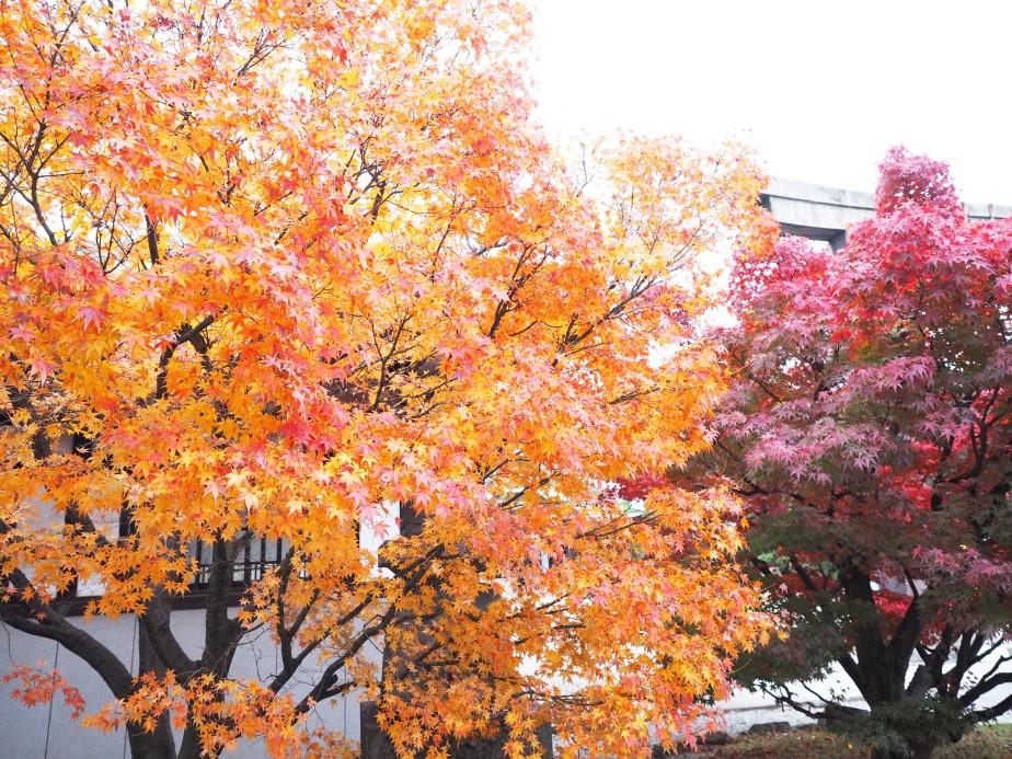 Layers in Osaka